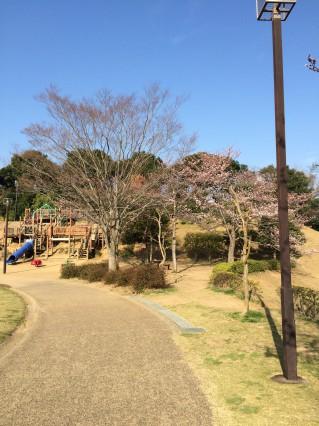 公津公園 桜