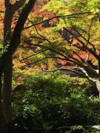 成田山公園 秋