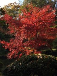 成田山公園 紅葉